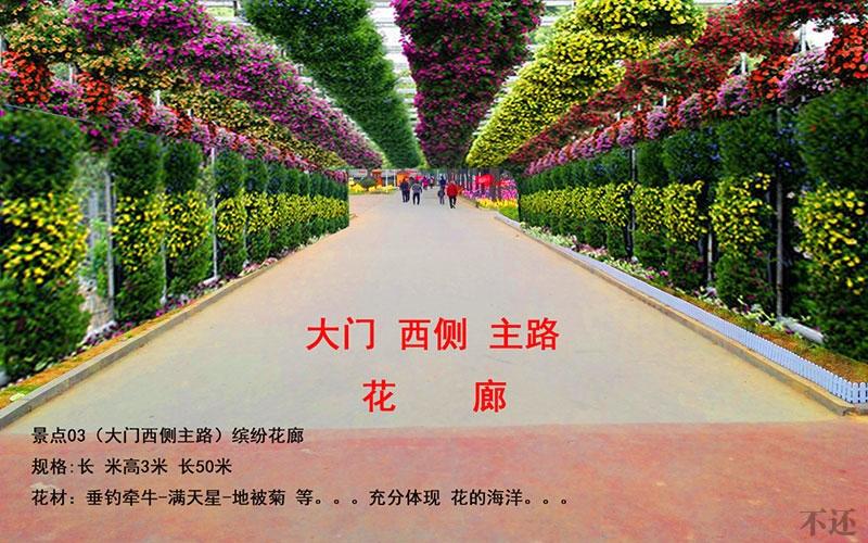 简阳菊花展