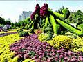 菊花立体花坛