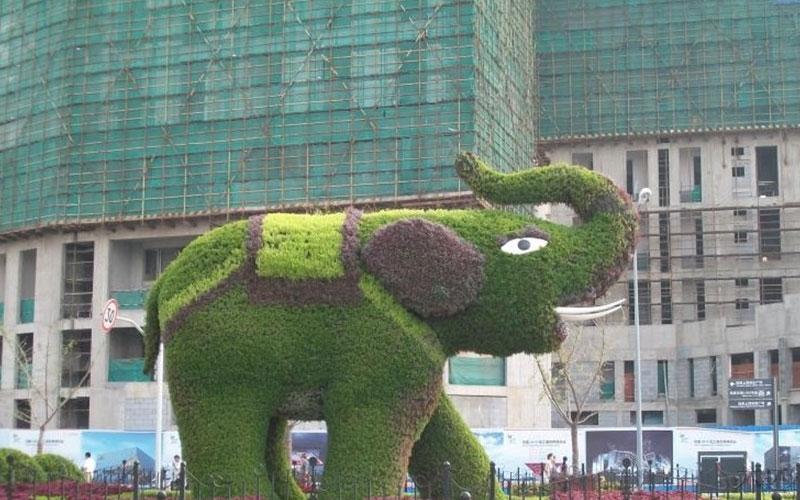 四川公园五色草造型